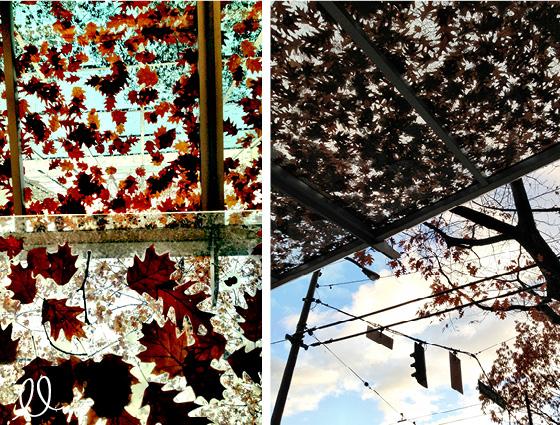 Fall - Natural Art - Maple Leafs